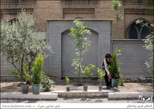 نیکوکاران درخت سروی در مدرسه دبستان گیو کاشته میشود